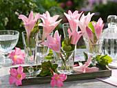 Intensiv duftende Blüten von Amarcrinum (Gartenamaryllis) in Gläsern