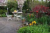 Sitzgruppe auf kleiner Terrasse aus Naturstein - Pflaster, Prunus serrulata 'Amanogawa' (Säulen - Zierkirsche), Acer palmatum (Fächerahorn), Tulipa