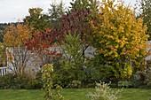 Parrotia (Eisenholzbaum), Rhus typhina (Essigbaum), Amelanchier
