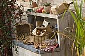 Arbeitsstil mit Blumenzwiebeln, Pflanzutensilien