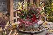Korb - Tasse bepflanzt mit Gaultheria procumbens (Scheinbeere)