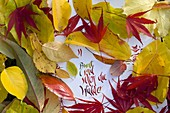 Buntes Herbstlaub auf Papier mit Aufschrift