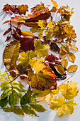 Tableau mit buntem Herbstlaub