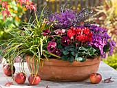 Terracotta - Schale bepflanzt mit Cyclamen (Alpenveilchen), Aster dumosus