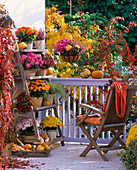 Vorher - Nachher Balkon mit Chrysanthemum (Herbstchrysanthemen)