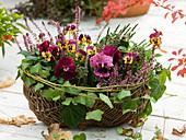Weidenkorb mit Henkel bepflanzt mit Viola