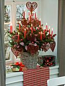 Picea pungens (Stechfichte) als lebendiger Weihnachtsbaum