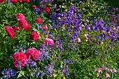 Paeonia (Pfingstrosen), Aquilegia (Akelei), Centaurea (Flockenblume)