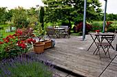 Holzdeck mit Citrus limon (Zitronen), Lavandula angustifolia (Lavendel), Rosa (Beetrose), Sitzgruppe auf Terrasse aus Natursteinplatten vor Castanea sativa (Eßkastanie, Marone)