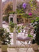 Tropenpflanzen im warmen Wintergarten