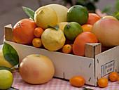 Zitrusfrüchte in Obststiege