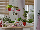 Kräuter und Sprossen ind der Küche