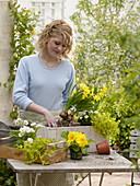 Holzkasten mit gelben und weißen Blumen bepflanzen 2/4