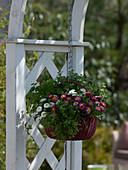 Ampelkorb mit Kräutern und Blumen mit eßbaren Blüten