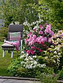 Rhododendron 'Scintillation' 'Morgenrot' (Alpenrosen) 'Schneegold'