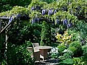 Pergola mit Wisteria floribunda (Blauregen), kleine gepflasterte Terrasse