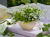 Galium odoratum (Waldmeister) blühend in Tasse