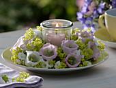 Tellerkranz aus Marienglockenblumen 'Rosea' 'Alba'