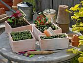 Sommerblumenaussaat