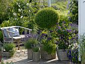 Terrasse mit blaublühenden Duftpflanzen
