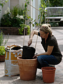 Birne in Terrakotta - Kübel pflanzen 5/8