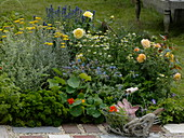 Beet mit Rosen und Kräutern