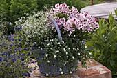 Korb bepflanzt mit Alstroemeria (Inkalilien), Euphorbia 'Diamond Frost'