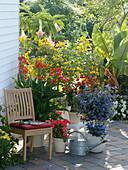 Kübelpflanzen-Terrasse