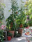 Terrasse mit Tomaten und Basilikum