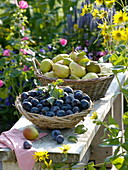 Freshly harvested plums and pears in baskets on bench