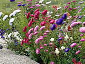 Blumenbeet mit Alurahmen
