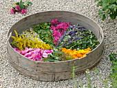 Trockensieb mit Blüten und Blättern von Tee- und Duftkräutern