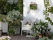 weiße Terrasse mit Korbmöbeln und Kübelpflanzen