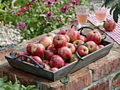 Apfelsorte 'Streifling' 'Winterstreifling' auf Holztablett