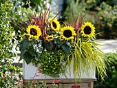 Weißer Kasten mit Sonnenblumen und Gräsern