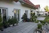 Terrasse am Haus mit Tomaten (Lycopersicon)und Gurken (Cucumis)