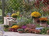 Herbstbeet an der Terrasse mit Backsteinmauer vor begrünter Sichtschutzwand