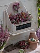 Kleines, weißes Holzregal, gefüllt mit geschnittenen Calluna und Hydrangea