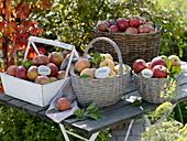 Äpfel in Sorten in Körben auf Holztisch