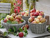Äpfel 'Elstar', 'Gala' und 'Alkmene ' in Weidenkörben auf Tisch