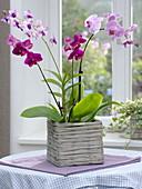Orchideen im eckigem Weidenkorb vor der Fensterbank