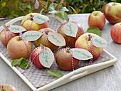 Apfelsorten mit Namensschildern auf Tablett