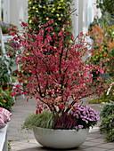 Schale mit Korkleisten - Spindelstrauch in Herbstfärbung