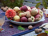 Teller mit Äpfeln 'Pinova' und Walnüssen