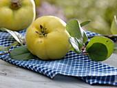 Nahaufnahme einer Quittenfrucht auf Serviette