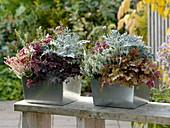 Herbstlich bepflanzter Kasten der bis -5° aushält