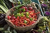 Verschiedene geerntete Paprika und Peperoni in Korb