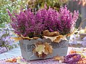 Erika - Kasten mit Ahornblättern