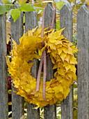 Blätterkranz aus Ahornblättern (Acer platanoides) am Zaun aufgehängt