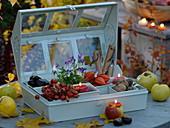 Geschenk für Gartenfreunde : kleines Gewächshaus